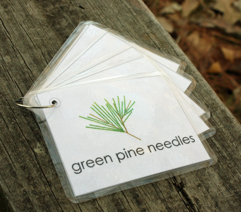 Etsy Printable Nature Walk Cards