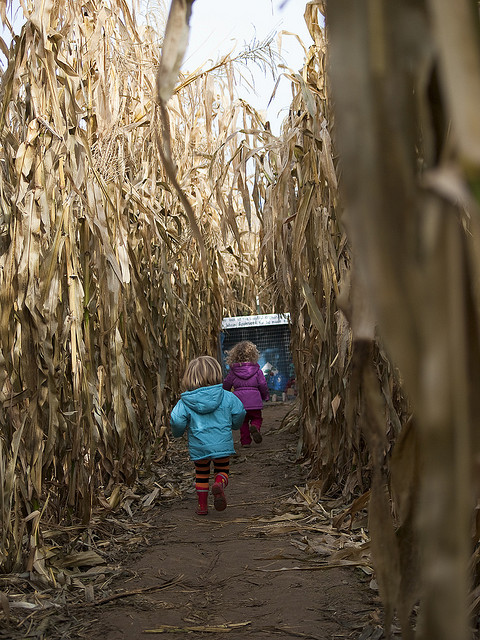 Corn Maze by gorgejeff on flickr