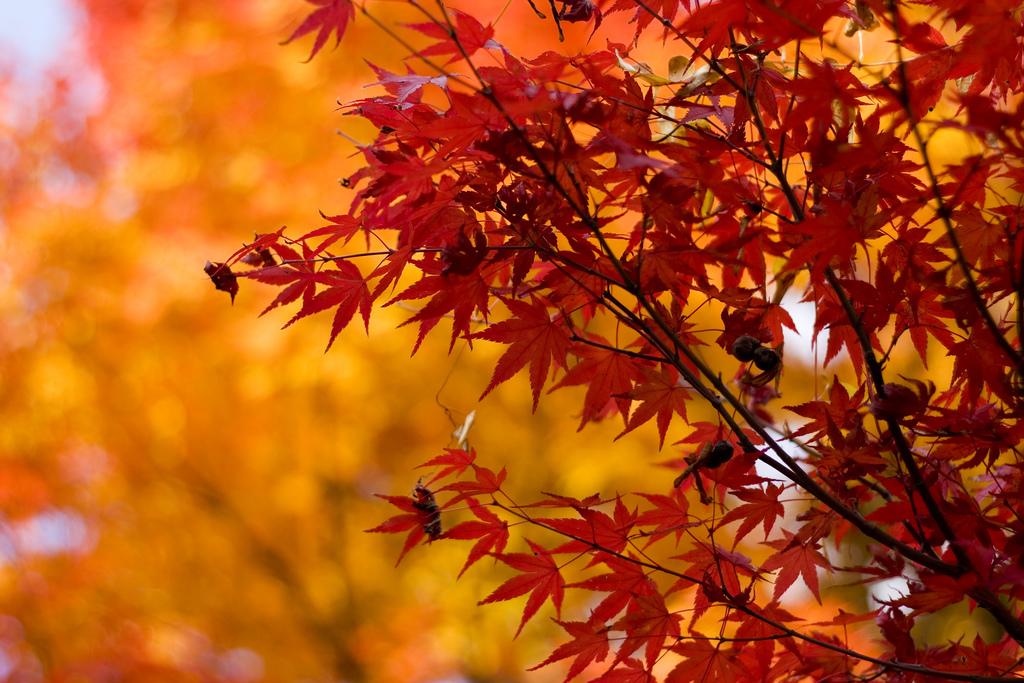 Fall Season by Matteo.Mazzoni on flickr