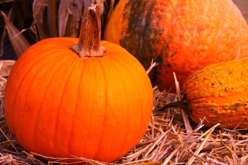 2013_10_12_IMG_0397 Tate Farm Pumpkins 800