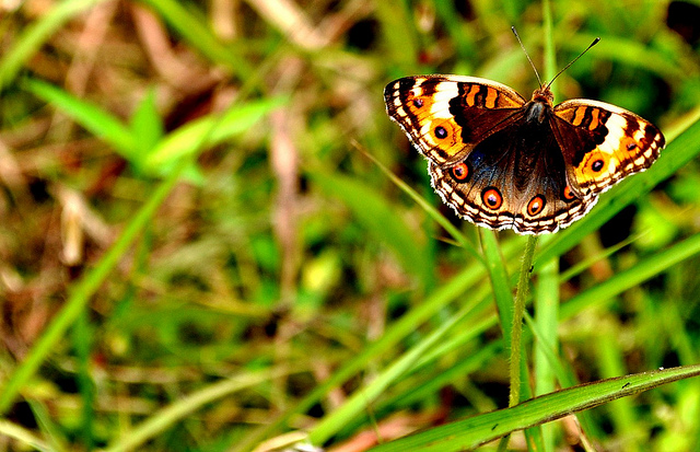Butterfly by whologwhy on flickr