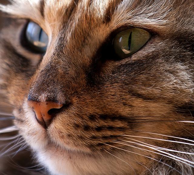 Cat by rarvasen on flickr