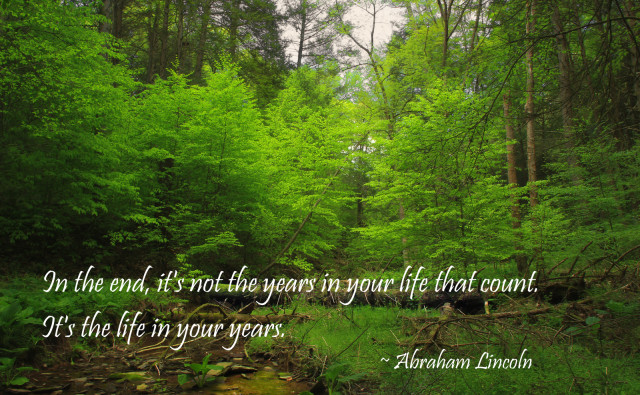 Lincoln Quote Forest by Nicholas_T on flickr