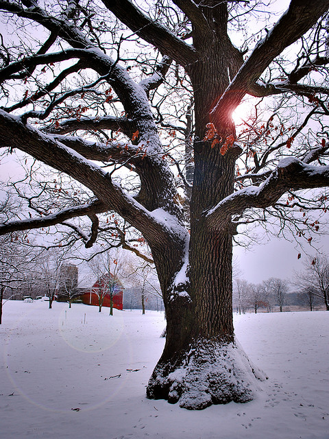 Winter by James Jordan on flickr
