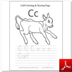 Calf Coloring Tracing Page