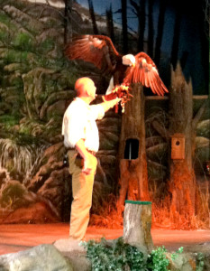Wings of America Show at Dollywood Bald Eagle