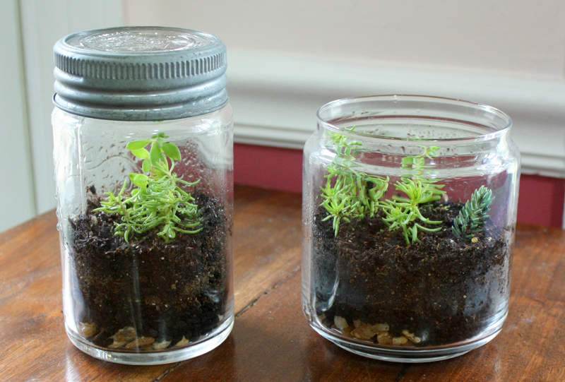 Portable Gardens Terrariums Completed
