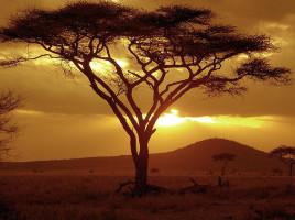 Sunset on Acacia Tree Serengeti National Park Tanzania by NeilsPhotography flickr