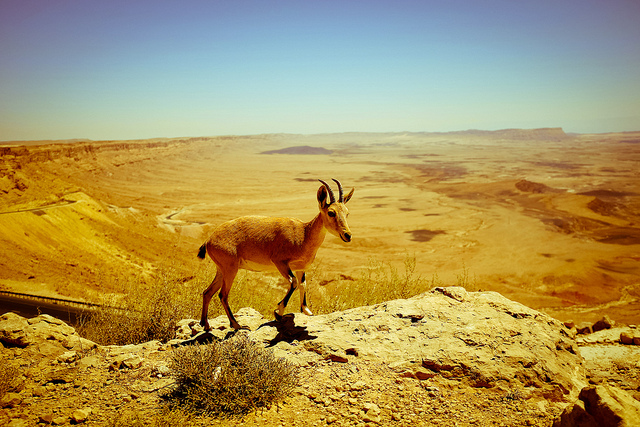 Ramon Crater Negev Desert Israel by amira_a on flickr