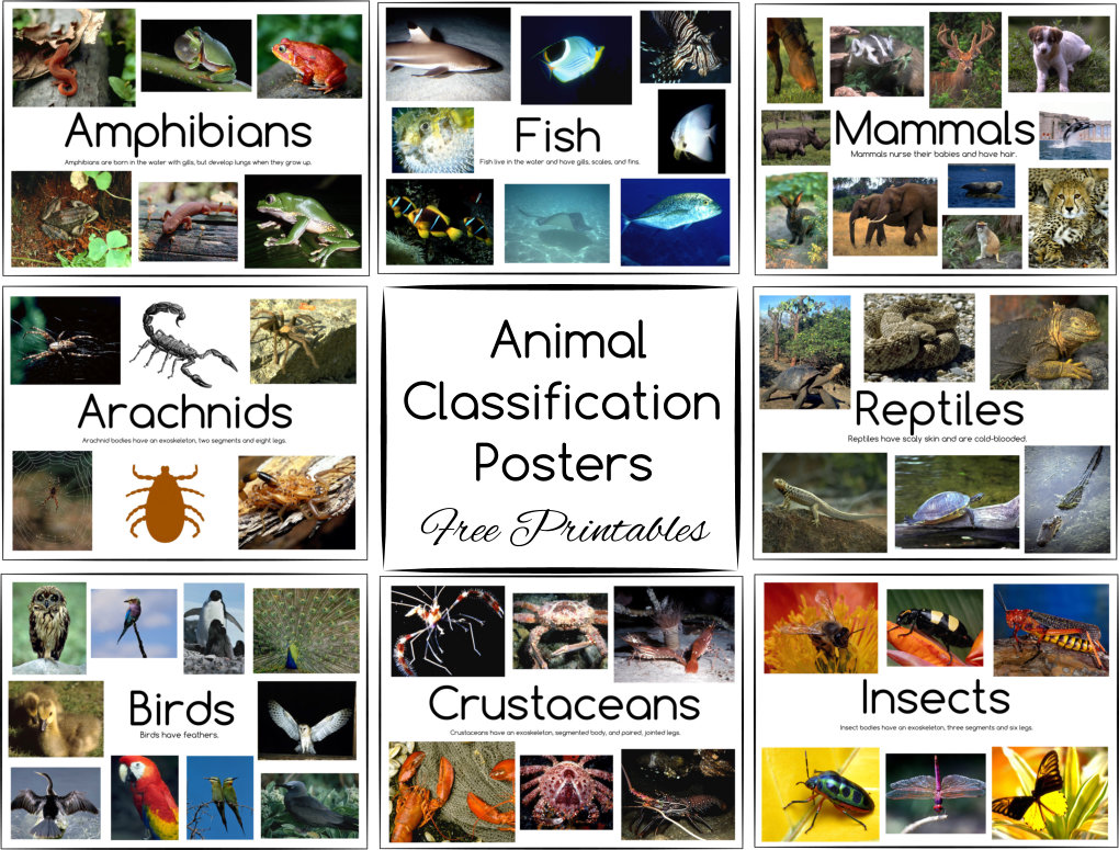 Animal Classification Posters Button